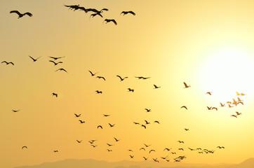 朝日と鶴の群れ