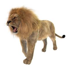 Foto op Canvas Leeuw Male Lion on White