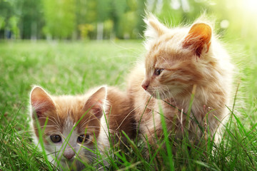 two kitten on green grass