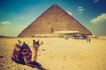 View of the Giza Pyramids, the tourists near them and the camel in the foreground. Egypt. Cairo.