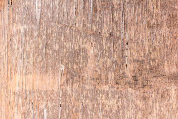 wood bark texture use as natural background