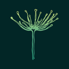 Umbrella plant. Angelica. Cover.