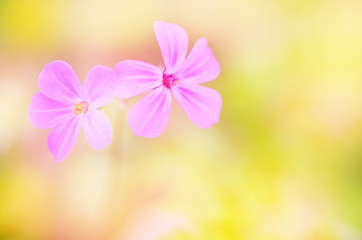 Flowers on a soft blurred background with copy space