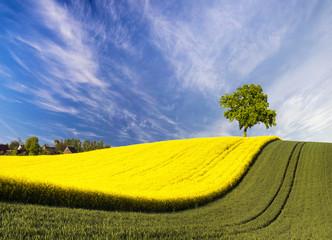 Wieś polska,wiosenne pola i drzewo na wzgórzu