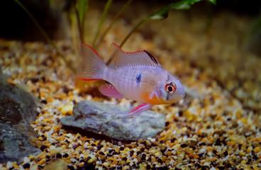 fish In aquarium,beautiful fish in aquarium.