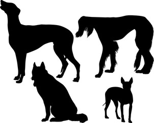 four black silhouette isolated on white dogs