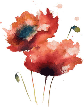 Watercolor isolated red poppies. Vector illustration.