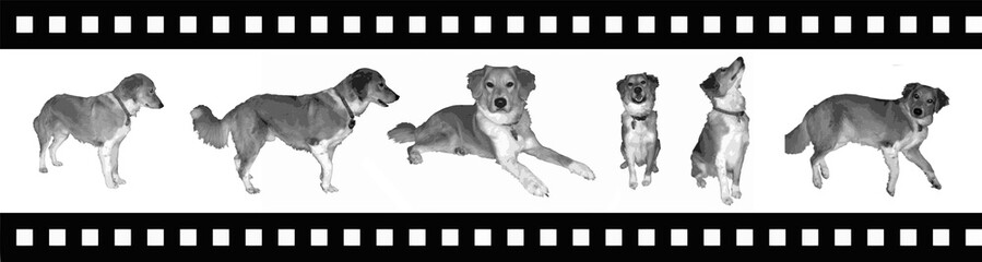 Dog silhouette on movie tape vector illustration. Eps 10