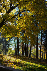 Golden autumn in the park.