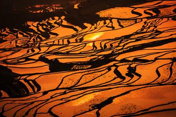 Autocollant pour porte Les champs de riz Terraced rice field