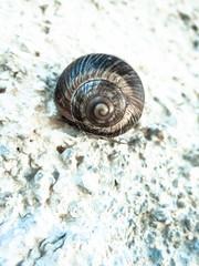 snail (16)