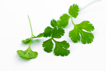 Fresh coriander leaves over white.