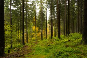 Wald im Harz bei Braunlage, Niedersachsen in Deutschland