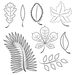 different leaves. contour plot. colorless contour leaves for your design