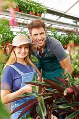 Mitarbeiter einer Gärtnerei im Gewächshaus