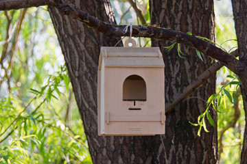 trough for birds on tree in the park