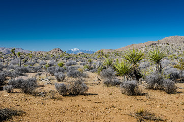 Wall Mural - Desert Landscape with Snowy Mountain