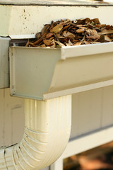 Neglected gutter and downspout clogged with rotting oak leaves