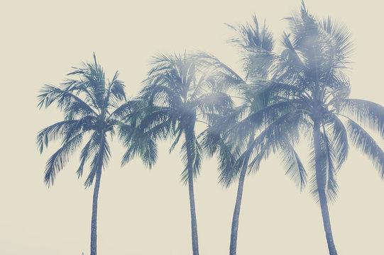 ヤシの木と空,ハワイ