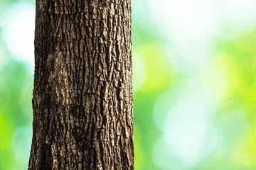 tree trunk closeup