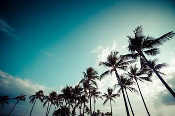 ヤシの木と青空,ハワイ,