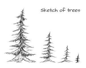 Pencil sketch of trees of different sizes