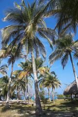 White beach on the island of Baru. Colombia