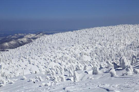 青森 八甲田山の樹氷