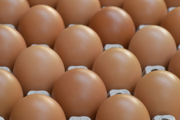 Chicken eggs in a row