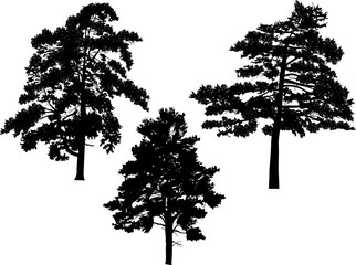 three large black pine silhouettes isolated on white