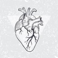 anatomical heart with triangle