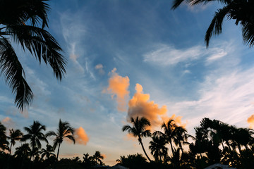 Beautiful landscape of palm trees at sunset
