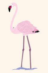 Ilustración de un Flamingo