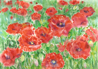 Red poppies flowers background, watercolor.