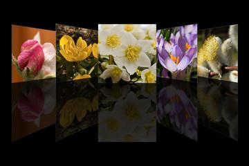 Frühling Collage