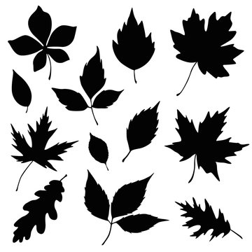 autumn leaves silhouette set