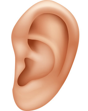 Illustration of ear human isolated on white background