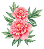 Vector rose pink flower illustration isolated on white stock image watercolor flower peony pink green leaves decorative vintage illustration isolated on white background mightylinksfo