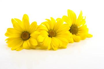 Valentine bouquet of yellow chrysanthemums