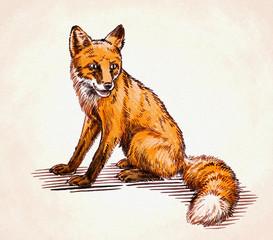 engrave ink draw fox illustration