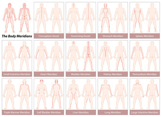 Body meridians - Chart with main acupuncture meridians, anterior and posterior view. Isolated vector illustration on white background.