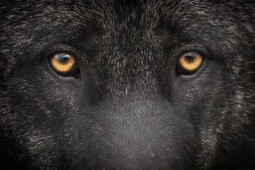 Foto op Aluminium Panter Loup noir