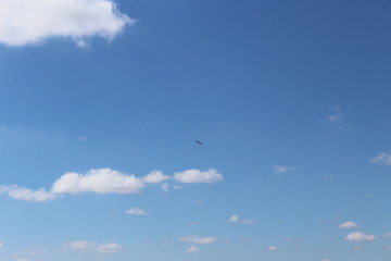 This bird owns the sky today in a beautiful sunny day.