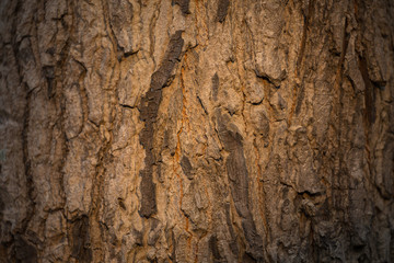 The surface of the bark and the light of the sun .