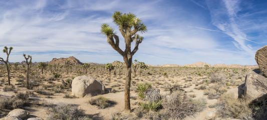 Joshua Tree Panorama