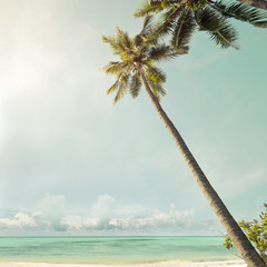 Fototapete - Landscape of palm trees at tropical beach coast, vintage color tone and film stylized