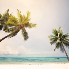Landscape of coconut palm trees at tropical beach coast, vintage color tone and retro stylized