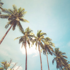 Coconut palm tree on tropical beach in summer - vintage colour effect