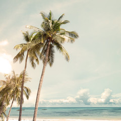 Coconut palm tree on beach in summer - vintage color effect