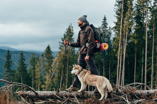 hiker with siberian husky dog looking at beautiful view in mountains